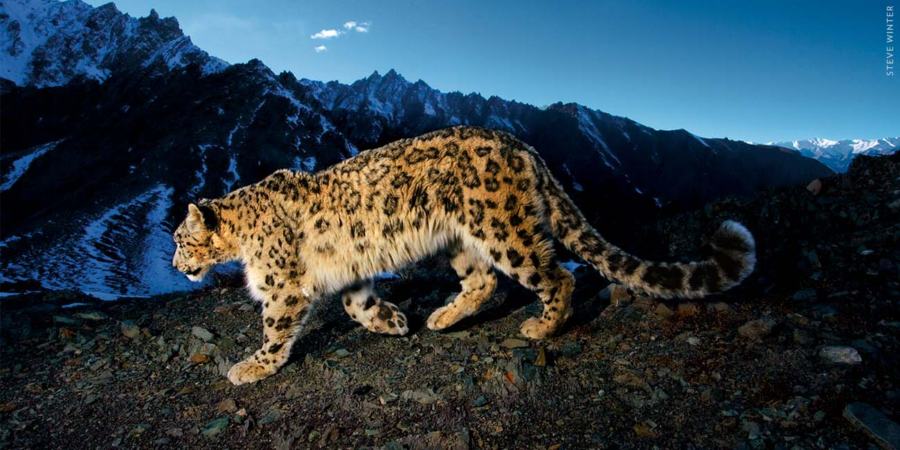 National Geographic Live - On the Trail of the Big Cats