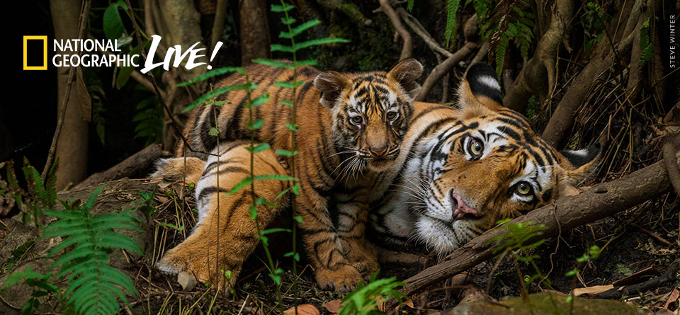 On the Trail of the Big Cats