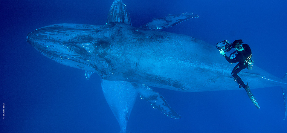 Nat Geo Live - Among Giants: A Life with Whales